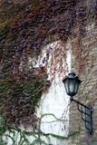Ivy wall. Iron lantern on the old wall covered with ivy Royalty Free Stock Photo
