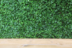 Ivy_Wall Image stock