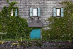Ivy Wall royaltyfri bild