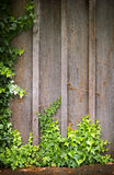 Ivy Wall Frame Stock Photos