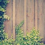 Ivy Wall Frame Instagram Royaltyfri Foto