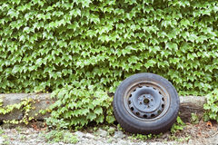 Ivy wall and old wheel Royalty Free Stock Photos