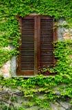 Ivy wall Royalty Free Stock Image