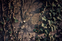 Ivy on wall Royalty Free Stock Images