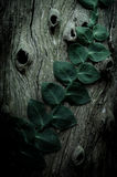 Ivy on wall in vintage style Royalty Free Stock Images