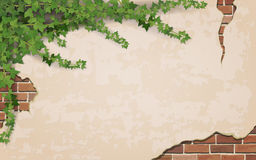 Ivy on weathered wall background. With brick masonry.  Vector realistic illustration Stock Photography