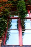 Ivy on window Royalty Free Stock Photo