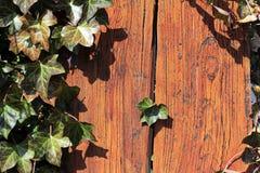 Ivy window Stock Photos