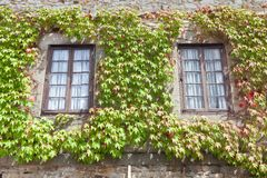 Ivy on the windows Royalty Free Stock Photo
