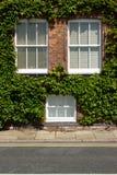 Ivy windows. stock photography
