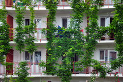 Ivy winds over the balconies of apartment house Royalty Free Stock Image