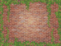Ivy winds on the red brick wall background Stock Images