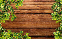 Ivy plant on the  wood. Ivy on the wooden background Stock Images