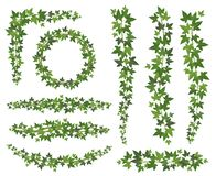 ivy zielone Liście na wiszących pełzacz gałąź Ścienny wspinaczkowy bluszcz dekoracji ściany rośliny wektoru set ilustracji