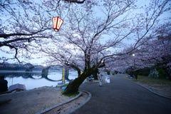 Iwakuni sakura Royalty Free Stock Photo