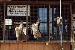 Iwatayama猴子公园在Arashiyama,日本 免版税库存照片