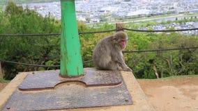 Iwatayama猴子公园 股票视频