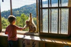 Iwatayama-Affe-Park Stockbild