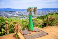 Iwatayama-Affe-Park Lizenzfreie Stockbilder