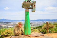 Iwatayama Monkey Park. Close up of Japanese macaque sitting and propsective view of observation binoculars in Iwatayama Monkey Park, Arashiyama in Kyoto, Japan Stock Images
