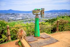 Iwatayama Monkey Park. Japanese macaque near observation binoculars in Iwatayama Monkey Park, Arashiyama, Kyoto, Japan. There are 120 Macaca Fuscata monkey in Royalty Free Stock Images