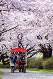 Iwate, Japan - April 19: Een paard-gedreven vervoer in Sakura tunn Royalty-vrije Stock Foto's