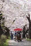 Iwate Japan - April 19: Endrivande vagn i Sakura tunn Royaltyfria Foton