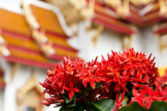 Free Ixora, Church Royalty Free Stock Images - 35423709