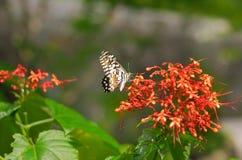 Ixora en vlinder royalty-vrije stock foto