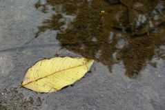 Yellow leaf. On water in garden Royalty Free Stock Image