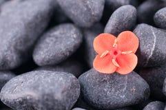 Free Ixora Prince Of Orange Flower Extreme Close Up Royalty Free Stock Photography - 28172837
