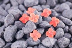 Ixora Prince of Orange flowers on black zen stones Royalty Free Stock Photo