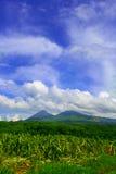 Izalco-Vulkan, El Salvador Lizenzfreie Stockfotos