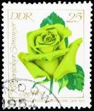 Izetka Köpenicker Sommer, serie de Rose Exhibition, cerca de 1972 imagem de stock