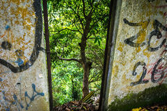 Izm i natura Zdjęcie Royalty Free