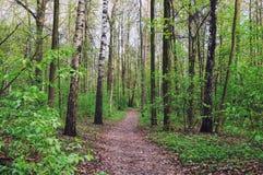Izmailovskii公园在春天 免版税库存照片