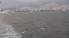 Izmir city, traveling on the sea,seagull fly, turkey. Izmir city,traveling ferry and seagull fly,turkey,1080p stock video footage