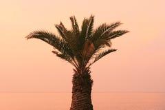 Izola,斯洛文尼亚-在散步的棕榈树在日落 库存照片