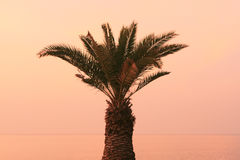 Izola Slovenien - palmträd på promenaden på solnedgången arkivfoton