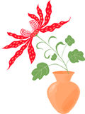 izolacja czerwony storczykowy white Fotografia Royalty Free