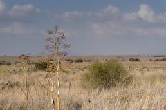 Izrael krajobraz Zdjęcia Royalty Free