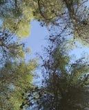 Izrael nieba drzewa obrazy stock