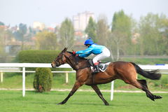 Izynka - horse racing in Prague Stock Photos