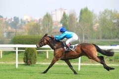 Izynka - horse racing in Prague Stock Photos