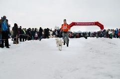 Járkov - enero 14: El competir con de perro de trineo Funcionamientos del deportista con el perro encendido Fotografía de archivo