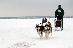 Járkov - enero 14: El competir con de perro de trineo Funcionamientos del deportista dogsled en s fotos de archivo libres de regalías