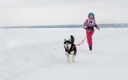 Járkov - enero 14: El competir con de perro de trineo Los funcionamientos de la muchacha del deportista con hacen Imagen de archivo