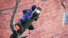Járkov, Ucrania - 1 de febrero de 2019: un hombre con una motosierra hace poda un árbol, cortó ramas grandes almacen de metraje de vídeo