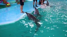 Járkov, Ucrania - 19 de noviembre de 2017: los delfínes nadan hasta instructores en la aguamarina muestran almacen de metraje de vídeo