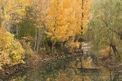 Júcar flod med bron Royaltyfria Foton
